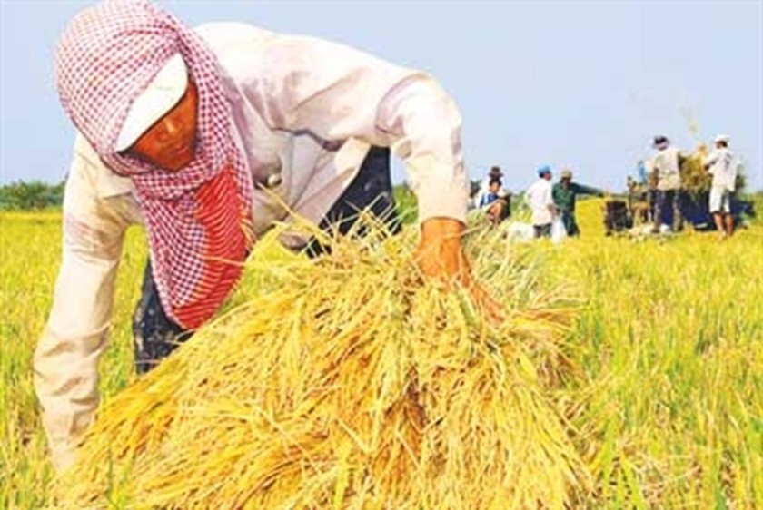 Vietnam to export 4 million tons of rice | Business | SGGP