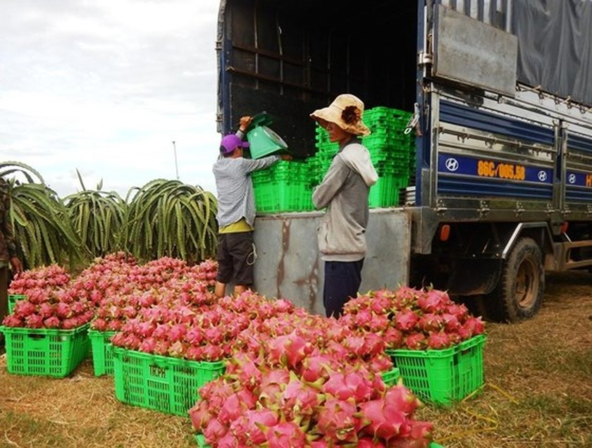 Scarcity causes dragon fruit price to make new record ảnh 1