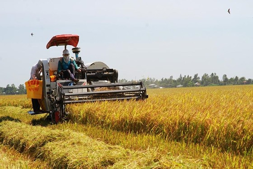 Rice exports drop in first months of this year ảnh 1