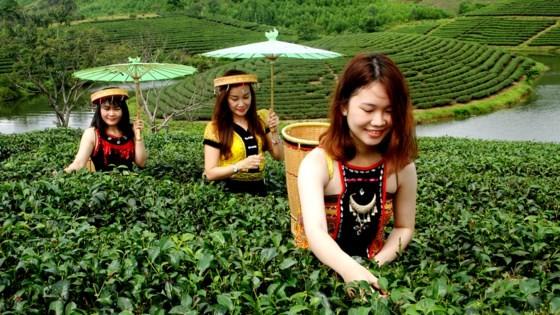 Ngỡ ngàng ốc đảo chè đầu tiên của Việt Nam ảnh 2