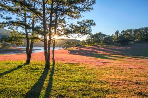 Đà Lạt - Thảo nguyên cỏ hồng ảnh 3