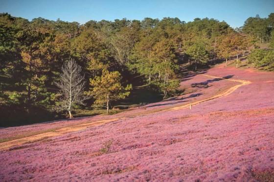 Đà Lạt - Thảo nguyên cỏ hồng ảnh 4