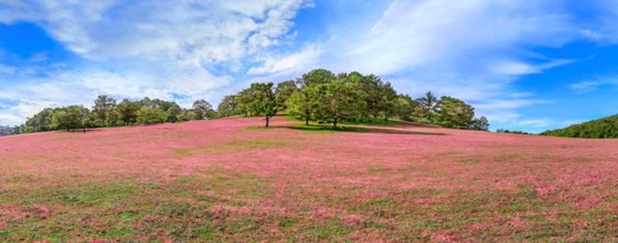 Đà Lạt - Thảo nguyên cỏ hồng ảnh 5
