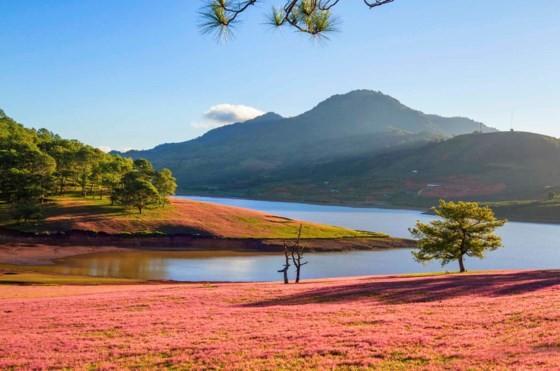 Đà Lạt - Thảo nguyên cỏ hồng ảnh 6