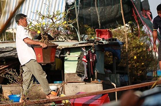 Chợ hoa xuân trên bến dưới thuyền… ảnh 3