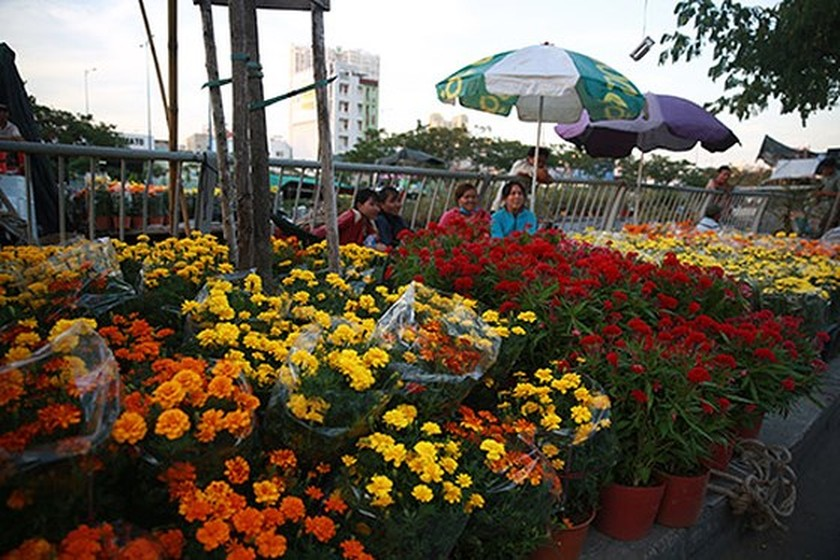 Binh Dong Floating Flower Market.Hcmc S Unique Floating Flower Market Opens Photo Gallery Sggp