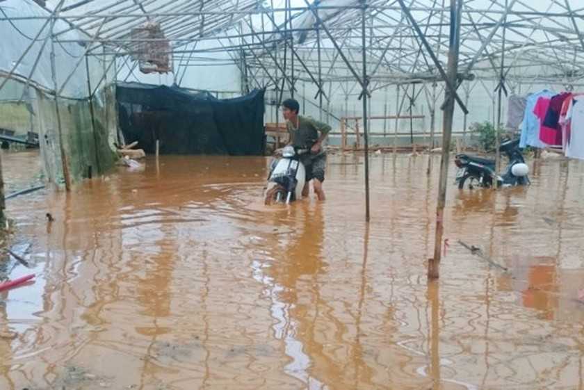 Downpour destroys vegetable & flower crops in Da Lat ảnh 1