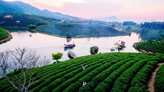 Ngỡ ngàng ốc đảo chè đầu tiên của Việt Nam ảnh 3