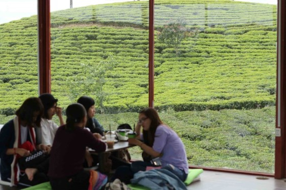 Khám phá vùng trà gần 100 năm ở Đà Lạt ảnh 7