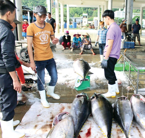 Khanh Hoa fishermen enjoy bumper catch ảnh 1