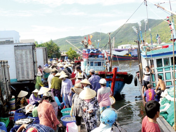 Khanh Hoa fishermen enjoy bumper catch ảnh 2