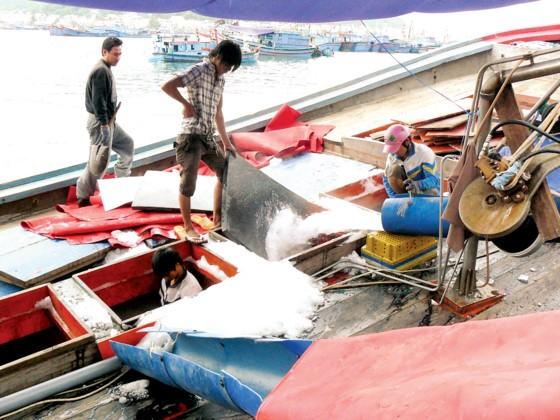 Khanh Hoa fishermen enjoy bumper catch ảnh 3