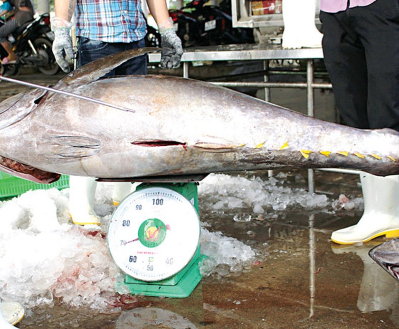 Khanh Hoa fishermen enjoy bumper catch ảnh 5