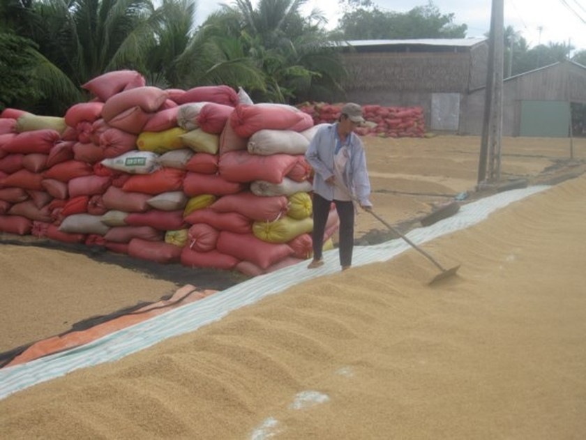 Vietnam exports 2.3 million tons of rice in first five months ảnh 1